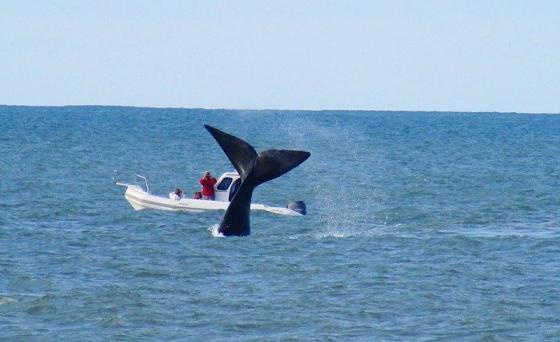 Se vieron ballenas en la costa marplatense