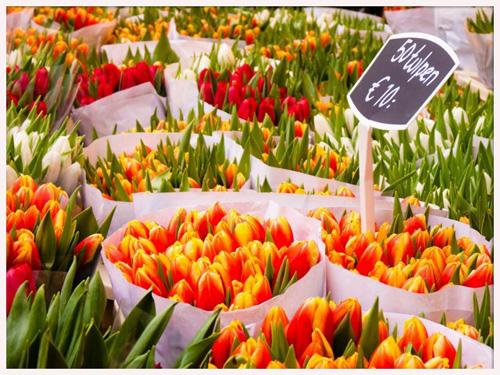 El colorido Mercado de las flores de �msterdam