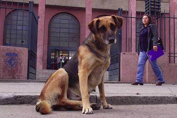 Pol�ticas educativas para la tenencia responsable de mascotas