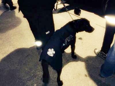 Perro tandilense intercept� 115 kilos de marihuana en Neuqu�n