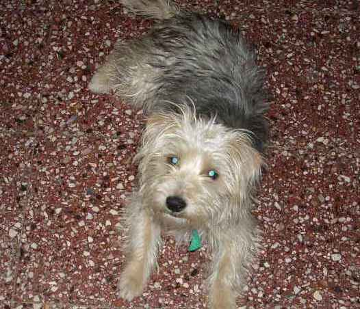 Perrita sigue buscando due�o